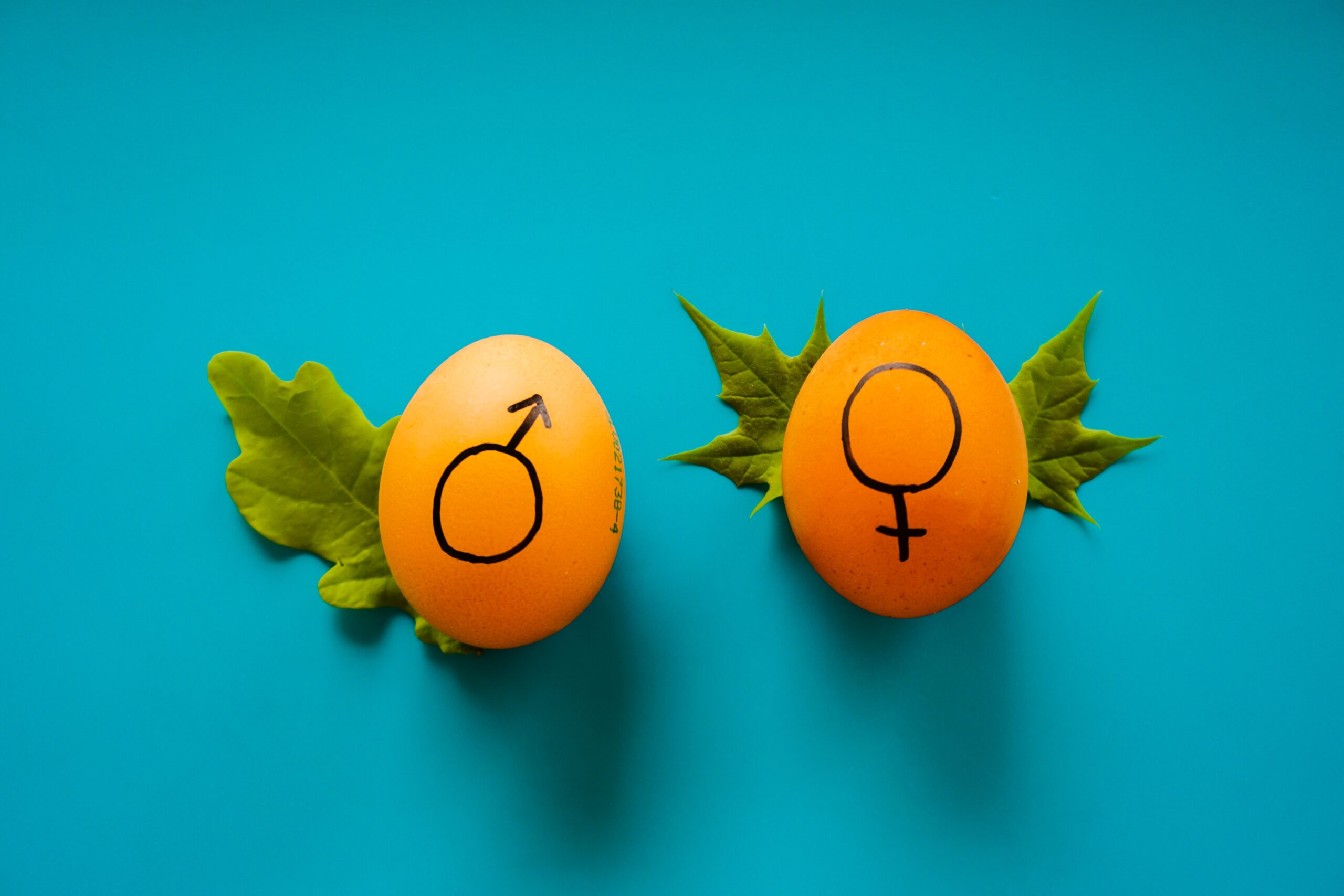Mastering The Concept Of Word Gender In Brazilian Portuguese Featured Image